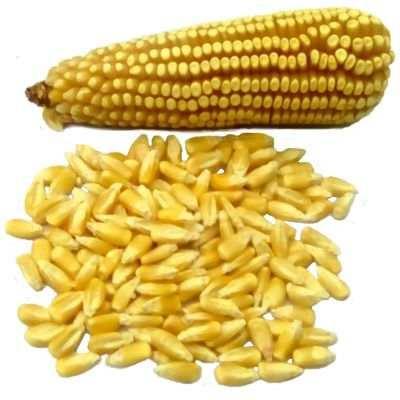 Desventajas del maíz