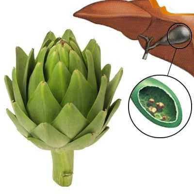 Beneficios del té de alcachofa contra los cálculos biliares