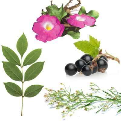 Plantas medicinales que curan el reumatismo para sanar el reumatismo