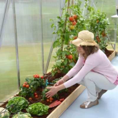 Beneficios de tener un invernadero en casa es bueno tener invernadero en casa - Invernaderos para casa ...
