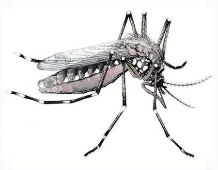 ¿Cómo evitar y combatir la reproducción del mosquito transmisor del dengue?