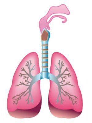Órganos que resultan más afectados por la pulmonía