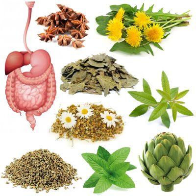 Aceleradores naturales que activan y mejoran los procesos digestivos